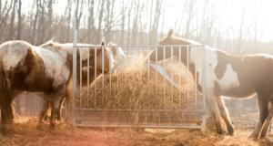 Tierheilpraktiker Ausbildung Erfahrung