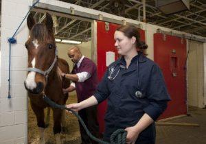Tierarzt Pferde