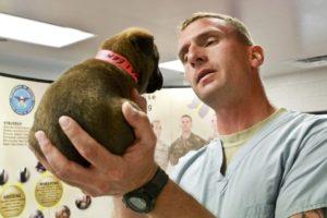 Tierarzt Pflege