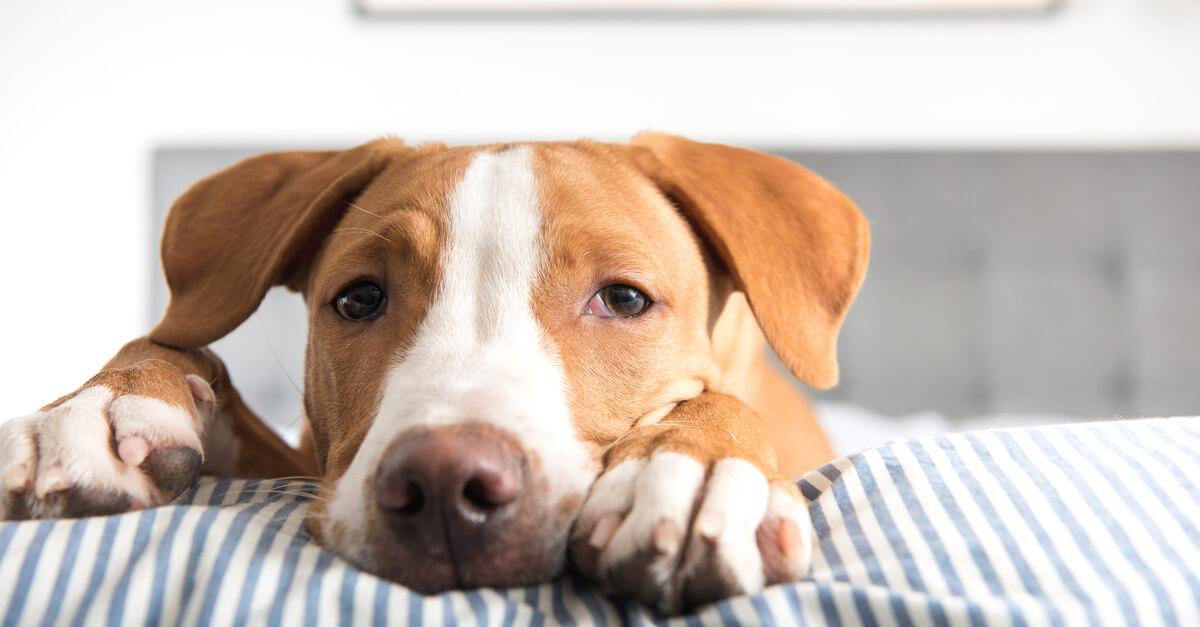 Ausbildung zum Tierakupunkteur
